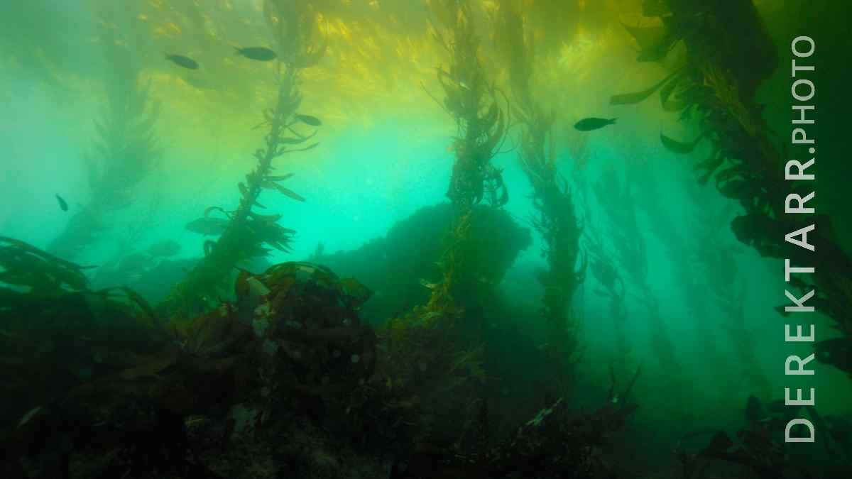 large view of photograph of Underwater Forest