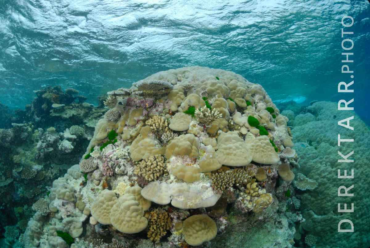 large view of Coral in the Astrolabe Reef