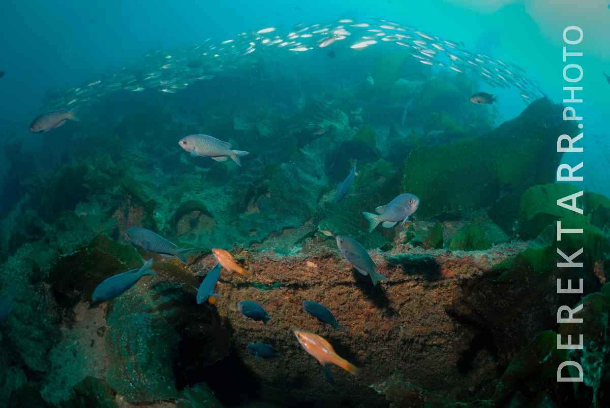 large view of Fish Swimming over the Wreck of the Valiant