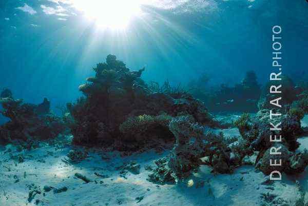 Fiji Paradise