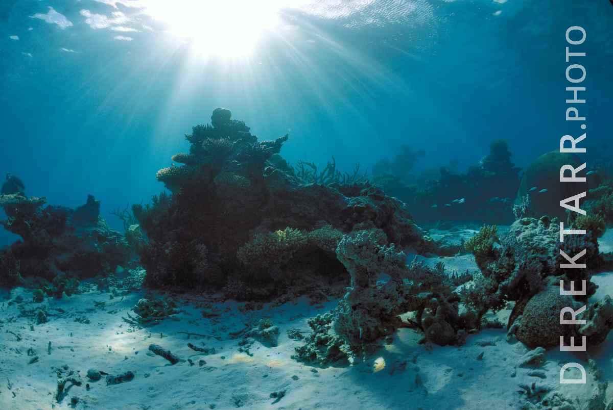 large view of Fiji Paradise