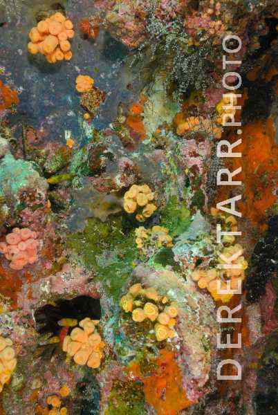 Colors of the Galapagos Reef