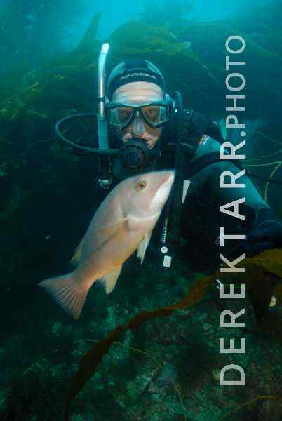 Diver and Sheepshead