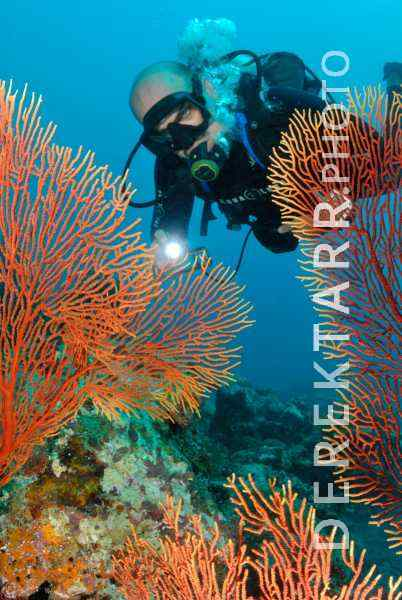 photograph of Diver and Sea Fans in Fiji