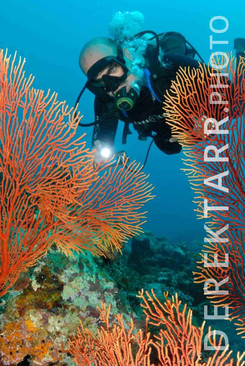 large view of photograph of Diver and Sea Fans in Fiji
