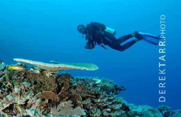 Diver Hovers over Coral at Kadavu Island in Fji