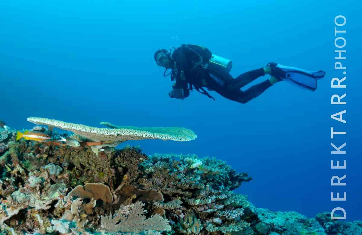 large view of Diver Hovers over Coral at Kadavu Island in Fji