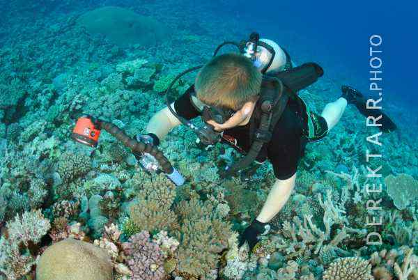 Diver Taking Pictures of Coral off Kadavu Island in Fiji