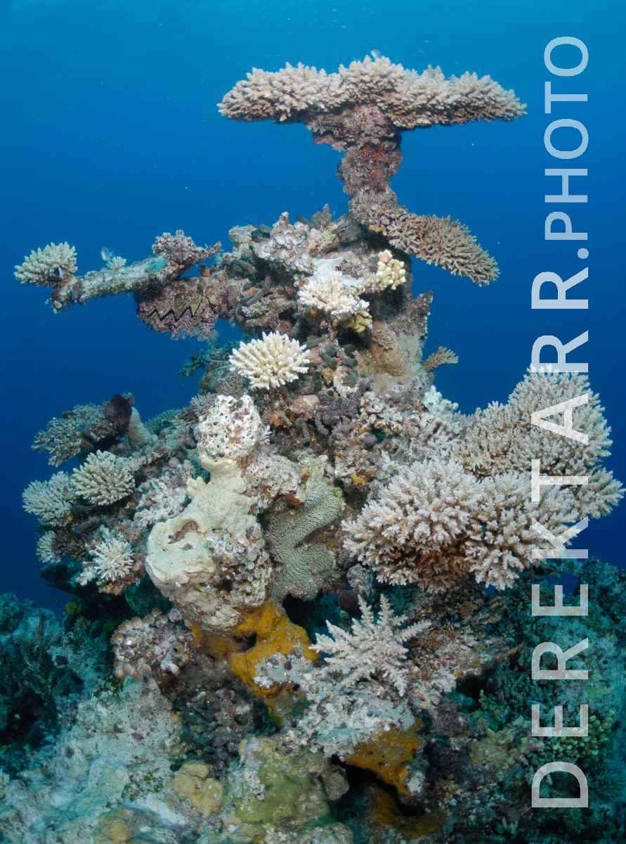 large view of Coral reef structure in Kadavu Fiji
