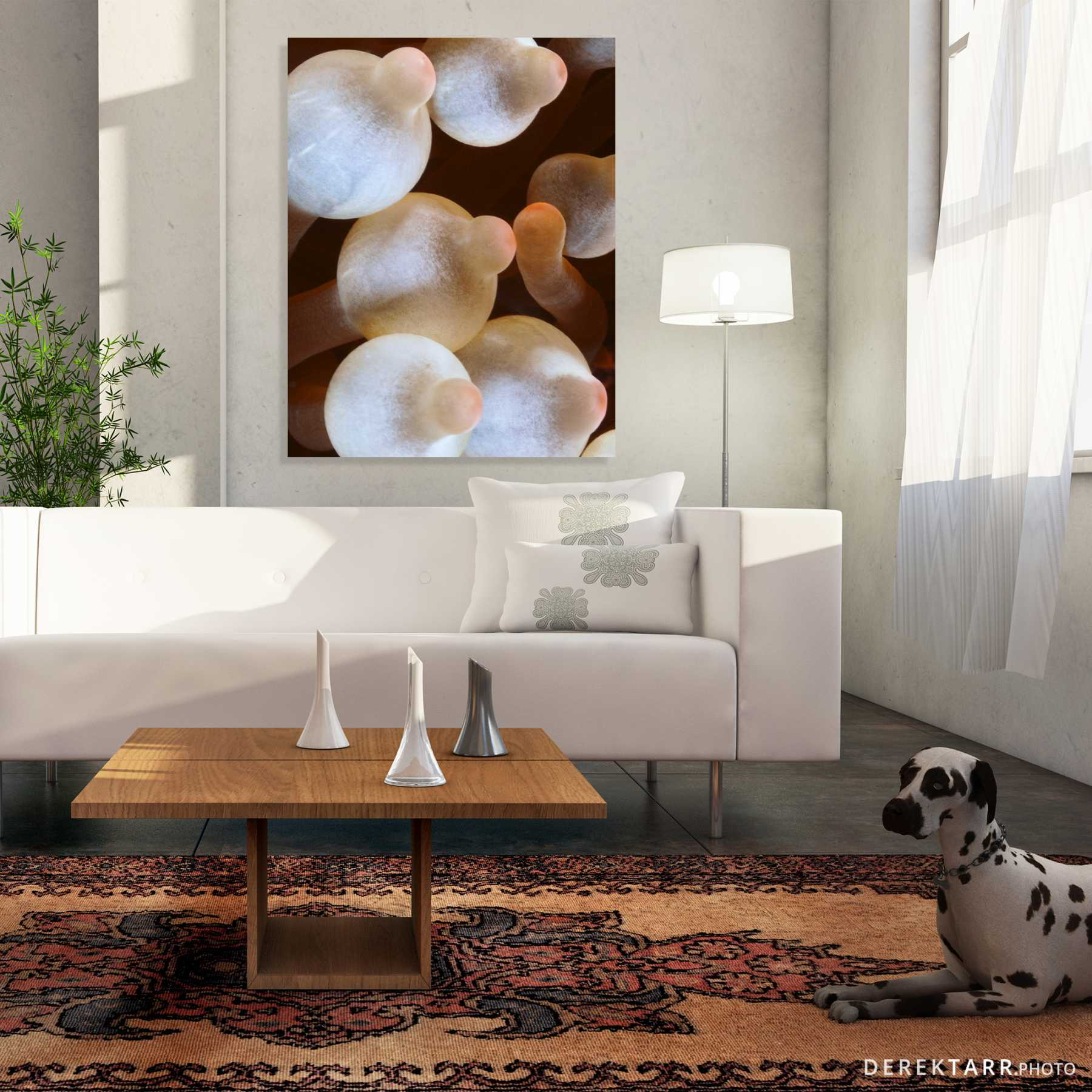 Living room with Bulb Anemones photo shown on the wall