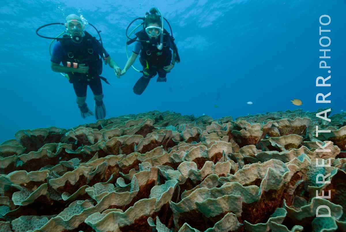 large view of Man and Woman Holding Hands While Scuba Diving over Coral Reef