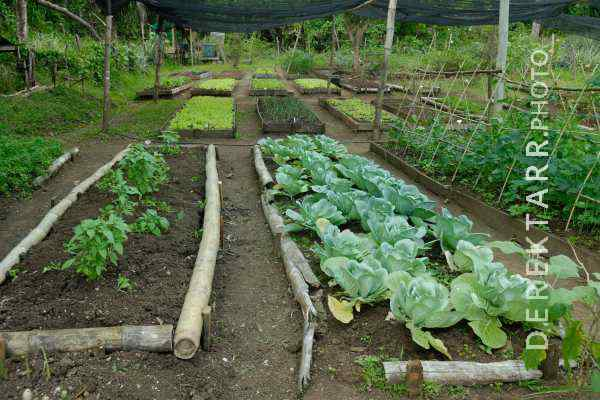 The organic garden at Matava resort