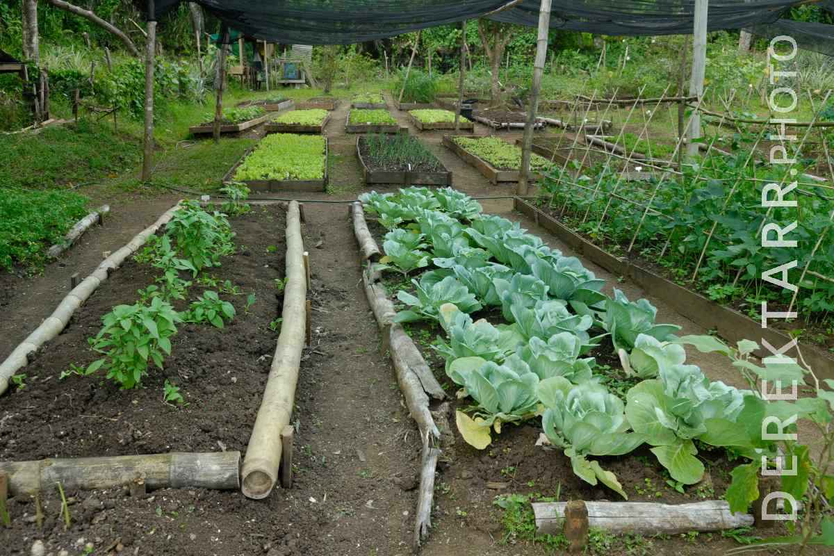 large view of The organic garden at Matava resort