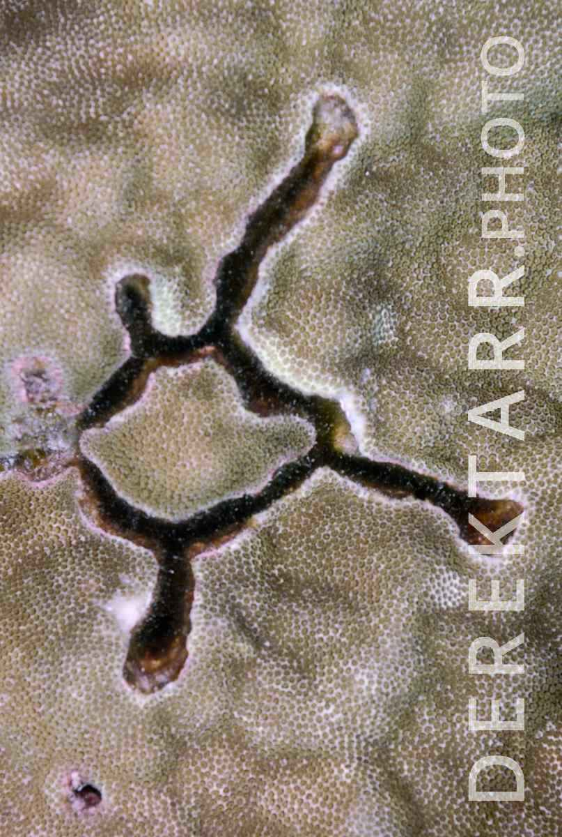 large view of photograph of Minotaur Man