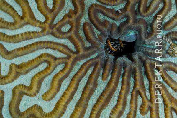 Coral Patterns