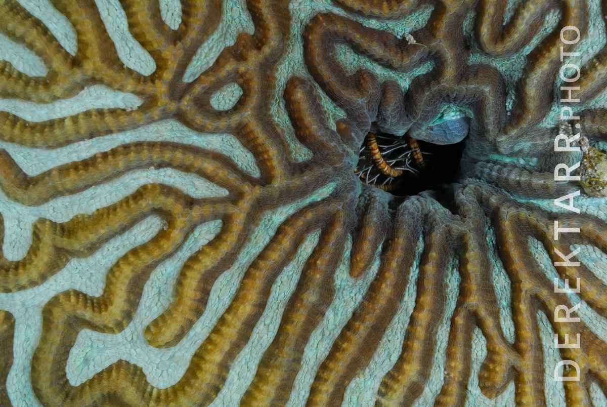 large view of Coral Patterns