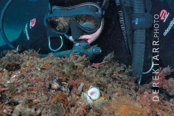 Scuba Diver Inspecting an Octopus