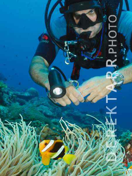Scuba Diver Checks out Anemonefish