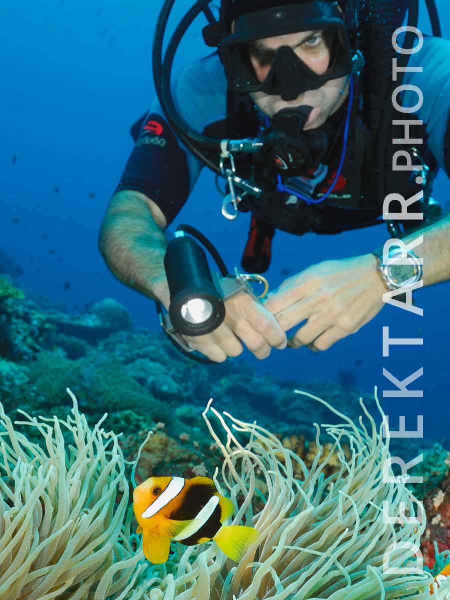 large view of Scuba Diver Checks out Anemonefish