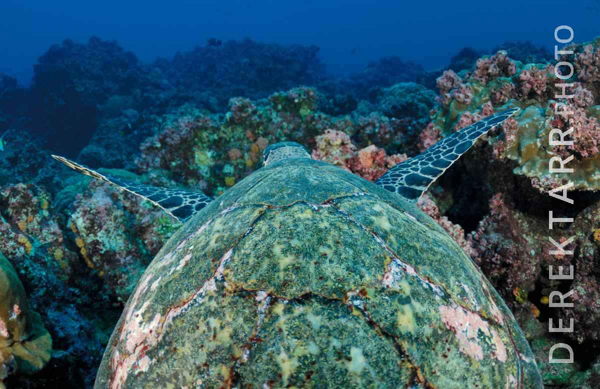 large view of The Reef From a Turtle's Point of View