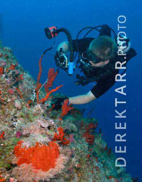 Scuba Diver Photographing Sponges in Fiji