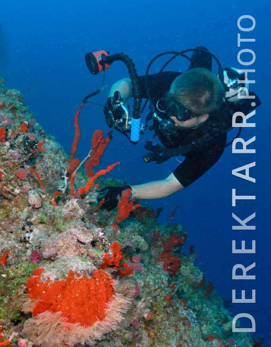 large view of Scuba Diver Photographing Sponges in Fiji