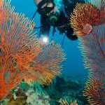 image detail page for Diver and Sea Fans in Fiji