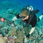 image detail page for Diver Taking Pictures of Coral off Kadavu Island in Fiji