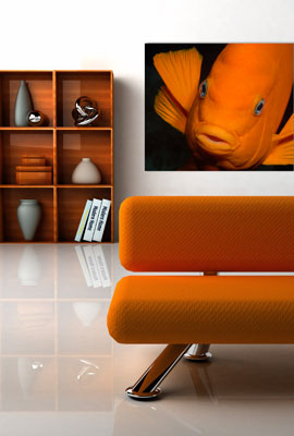 Photo of a modern interior a fine art print of Portrait of a Garibaldi on the wall